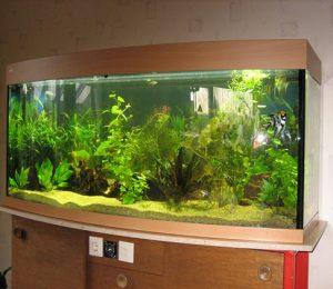 Sfaturi pentru amenajarea unui acvariu daca esti incepator