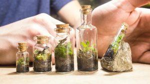 Cum poti realiza un mini ecosistem?