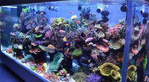 Pasiune pentru acvariile marine
