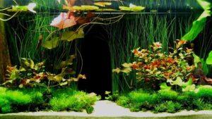 Ce plante ar trebui sa detina acvariul tau?