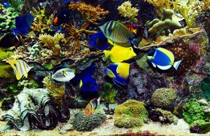 Detalii de care sa tii cont atunci cand iti doresti un acvariu