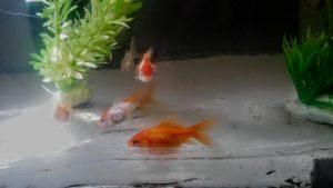 Palacerea de a avea propriul acvariu